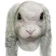 Маска Белый вислоухий кролик